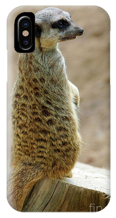 Adapted IPhone X Case featuring the photograph Meerkat Portrait by Carlos Caetano