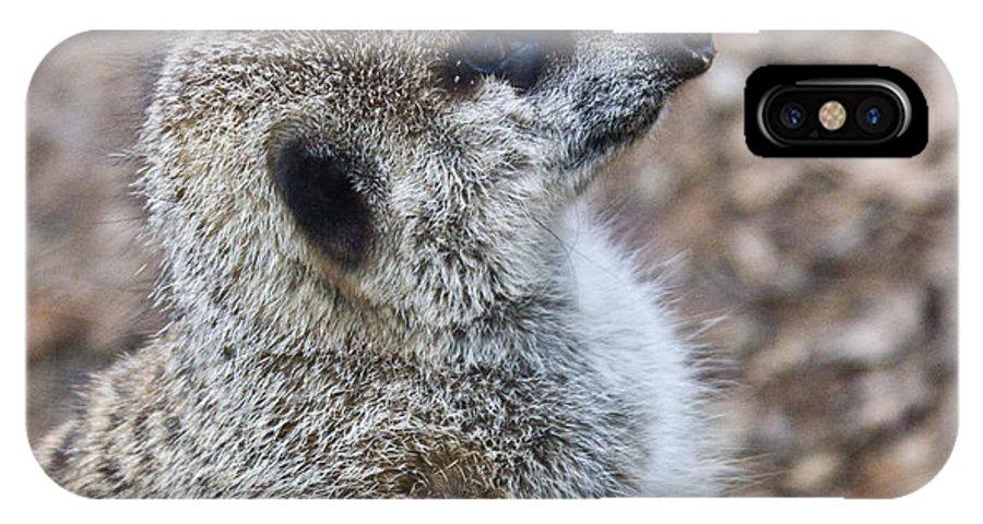Meerkat IPhone X Case featuring the photograph Meerkat Portrait by Douglas Barnett