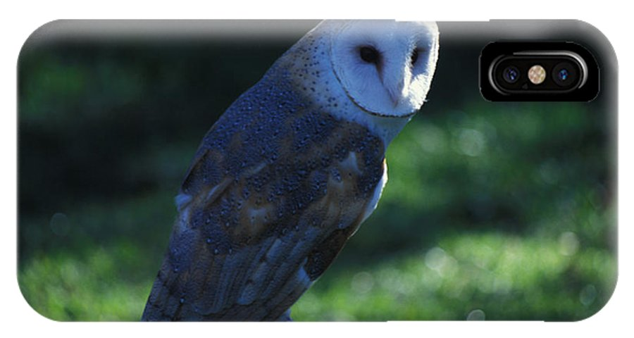 Owl IPhone X Case featuring the photograph Message For Harry Potter by Carl Purcell