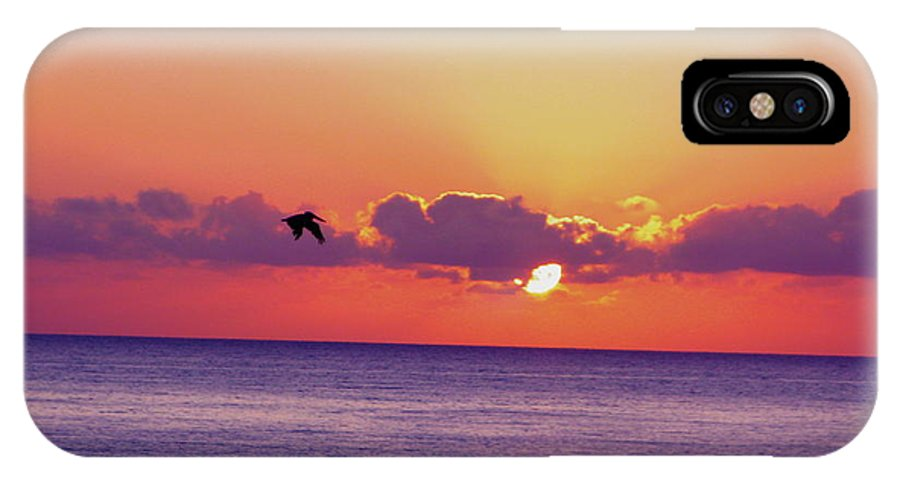 Cabo San Lucas IPhone X / XS Case featuring the photograph Mexican Bird by Ariane Moshayedi