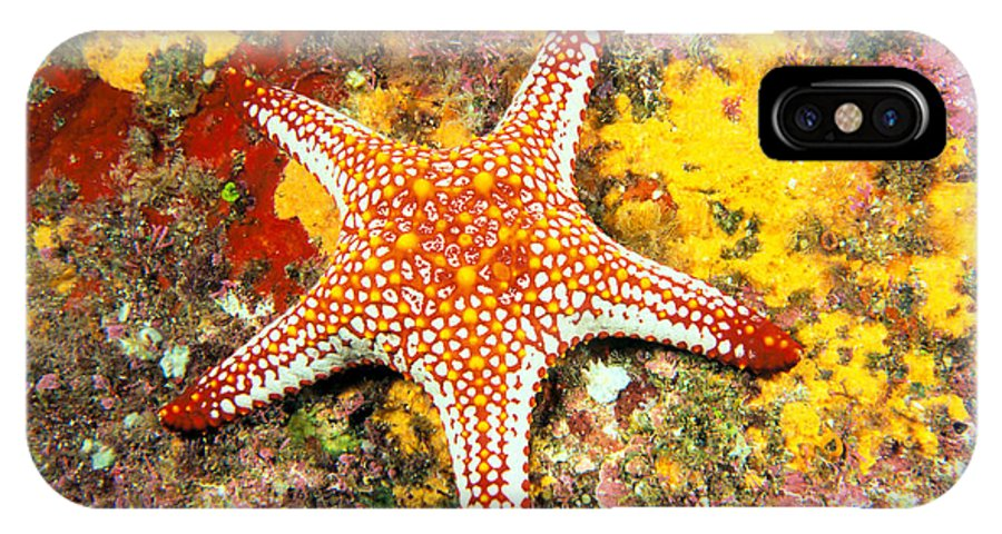 Animal Art IPhone X Case featuring the photograph Mexico, Gulf Sea Star by Dave Fleetham - Printscapes