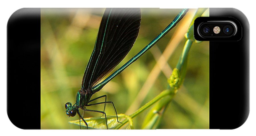 Digital Art IPhone X Case featuring the photograph Michigan Damselfly by Belinda Cox