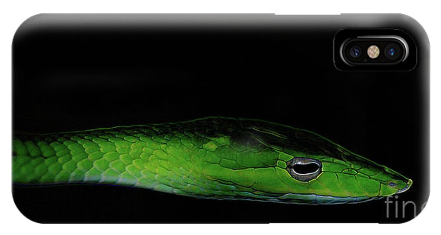 Abstract IPhone X Case featuring the photograph Mildly Venomous by Linda Shafer