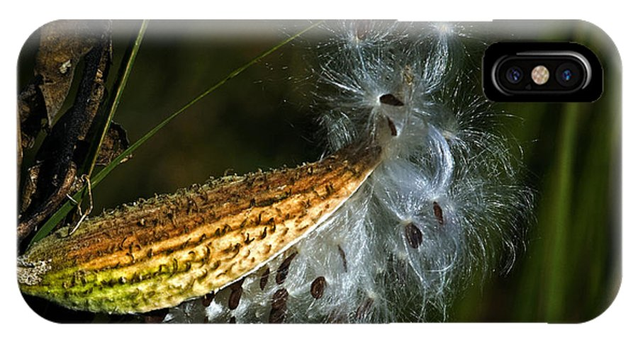 Autumn IPhone Case featuring the photograph Milkweed Pod by Al Mueller