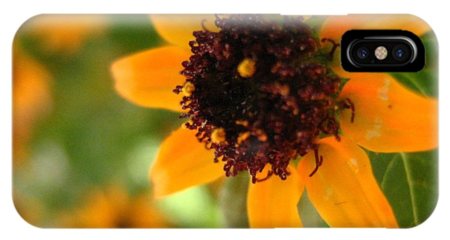 Flower IPhone X Case featuring the photograph Mini Sunflower by Melissa Parks