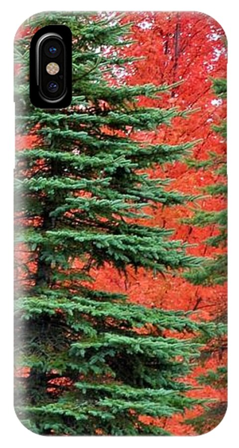 Autumn IPhone X Case featuring the photograph Minnesota Autumn Spruce Maple by Kimberly Benedict