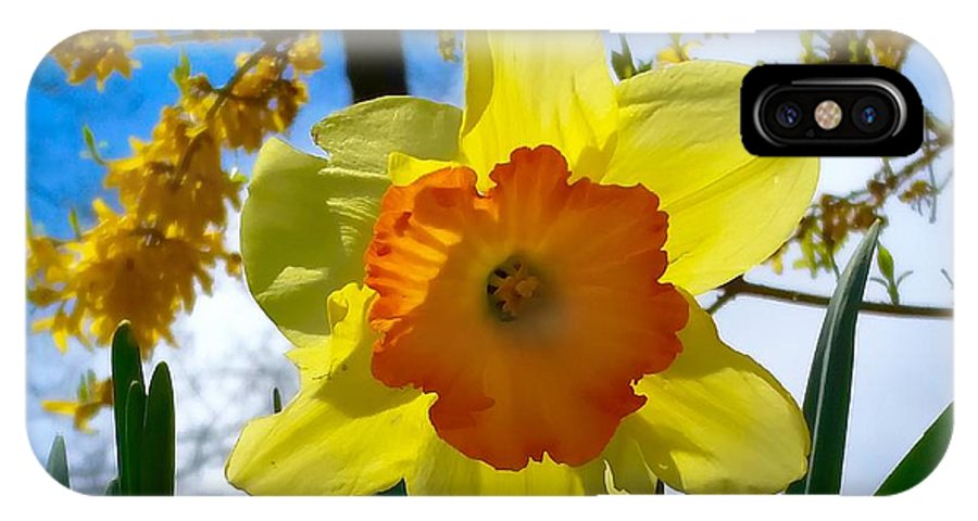 Daffodils IPhone X Case featuring the photograph Miss D Encore by Mioara Andritoiu