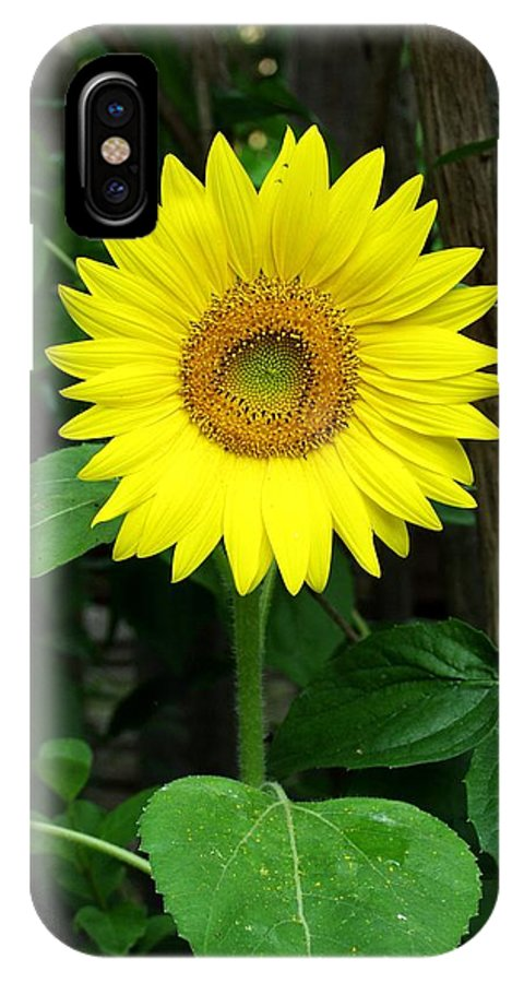 Yellow IPhone X Case featuring the photograph Miss Sunshine by Carol Sweetwood