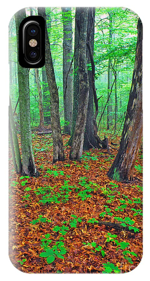 Usa IPhone X Case featuring the photograph Misty Forest by Thomas R Fletcher
