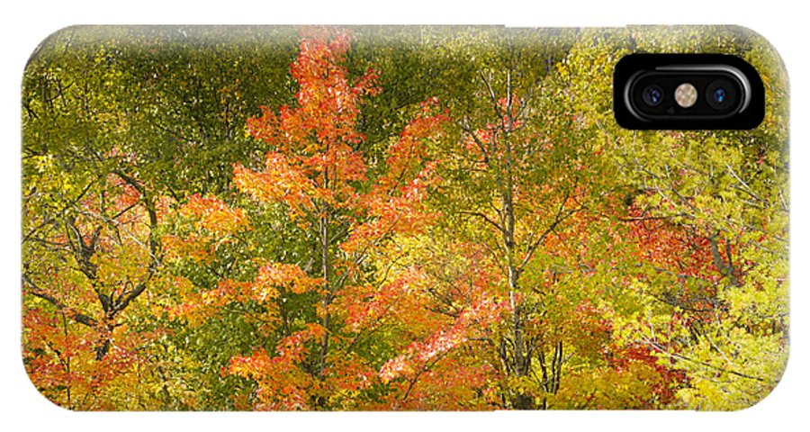 Tree IPhone X Case featuring the photograph Mixed Autumn by Phill Doherty