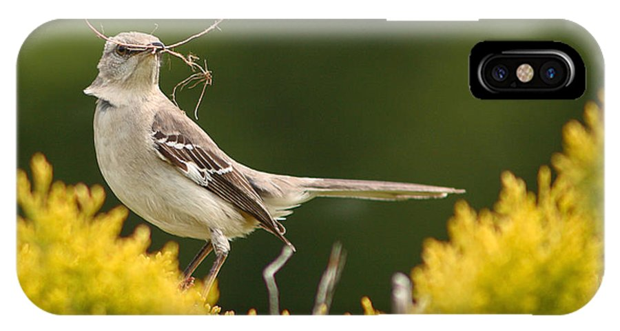 Mockingbird IPhone X Case featuring the photograph Mockingbird Perched With Nesting Material by Max Allen
