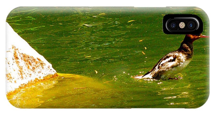 Mohawk Duck IPhone X / XS Case featuring the photograph Mohawk Duck by Debra   Vatalaro