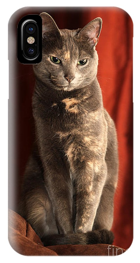 Cat IPhone X Case featuring the photograph Mollie by Amanda Barcon