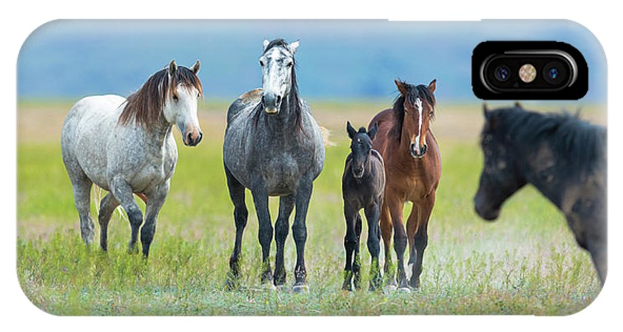 Mustangs IPhone X Case featuring the photograph Mom, Dad, And Two Colts by Greig Huggins