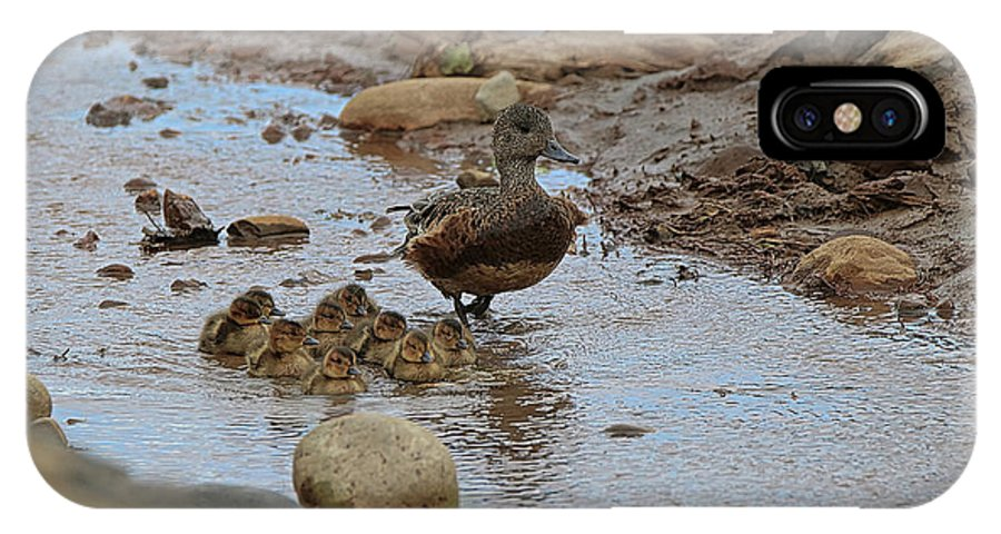 Mallard IPhone X Case featuring the photograph Mom Mallard And Ducklings by Amber D Hathaway Photography