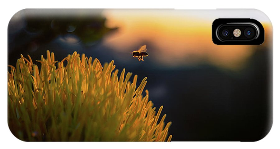 Bee IPhone X Case featuring the photograph Moment Of Gratitude by Rafael Fu
