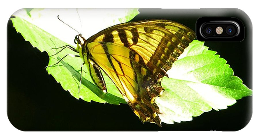 Butterfly IPhone X / XS Case featuring the photograph Moment Of Life by Galina Melnik