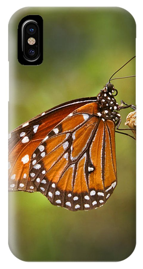 Monarch IPhone Case featuring the photograph Monarch Butterfly by Heather Coen