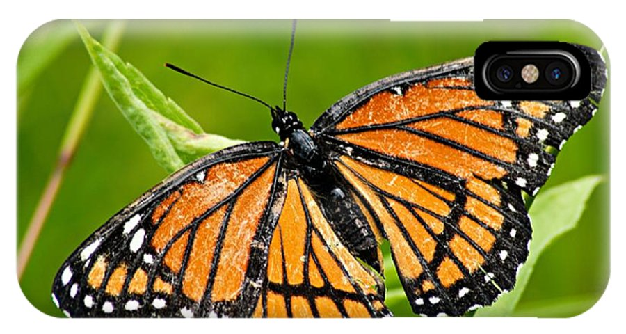 Monarch Butterfly IPhone X Case featuring the photograph Monarch Butterfly by Larry Ricker