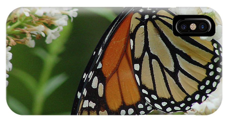 Yellow IPhone X Case featuring the photograph Monarch by Linda Seacord