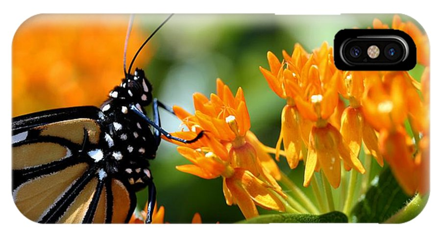 Betsy Lamere IPhone X Case featuring the photograph Monarch On Asclepias by Betsy LaMere