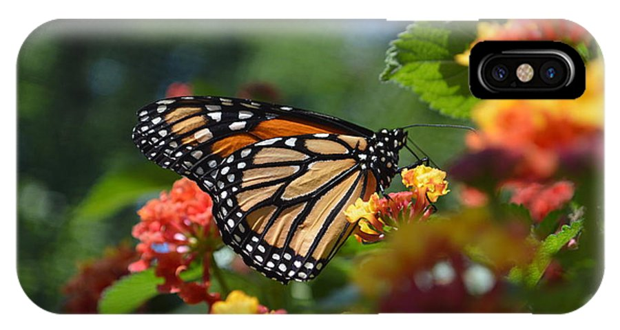 Butteryfly IPhone X Case featuring the photograph Monarch by Tim Votapka