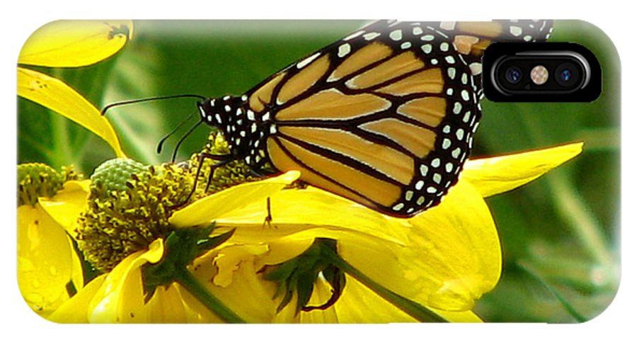 Bug IPhone Case featuring the photograph Monarchs Gold by David Dunham