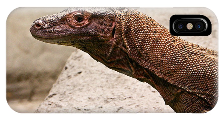 Monitor IPhone X Case featuring the photograph Monitor Lizard by Douglas Barnett