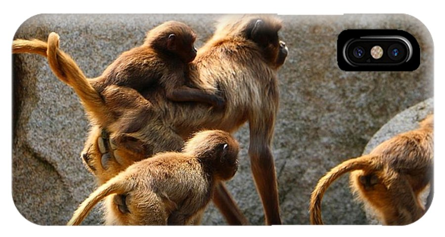 Animal IPhone X Case featuring the photograph Monkey Family by Dennis Maier