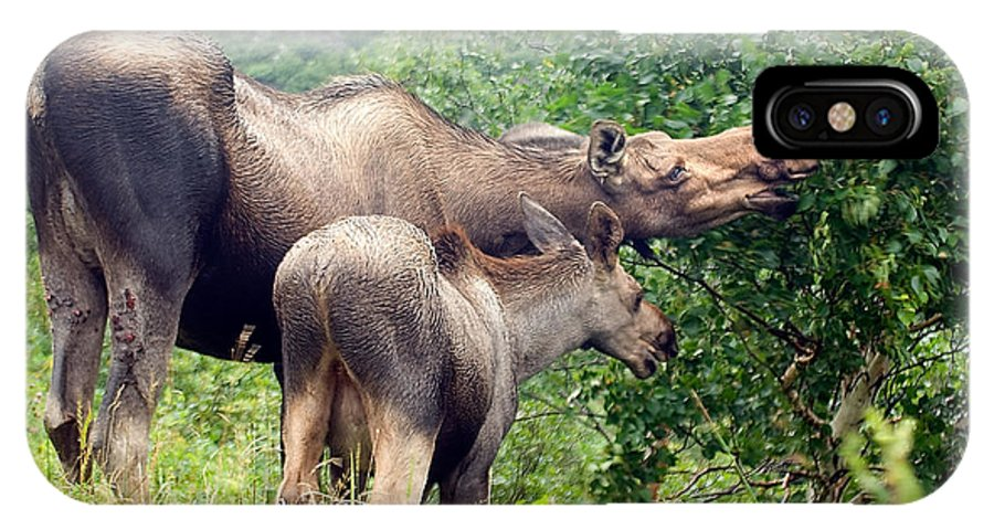 Moose IPhone Case featuring the photograph Moose And Calf Forage by Steve Somerville