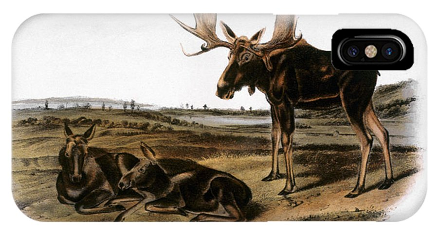 1846 IPhone X Case featuring the photograph Moose Deer (cervus Alces) by Granger