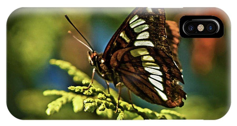 Animals IPhone X Case featuring the photograph Mormon Metalmark by Robert Bales
