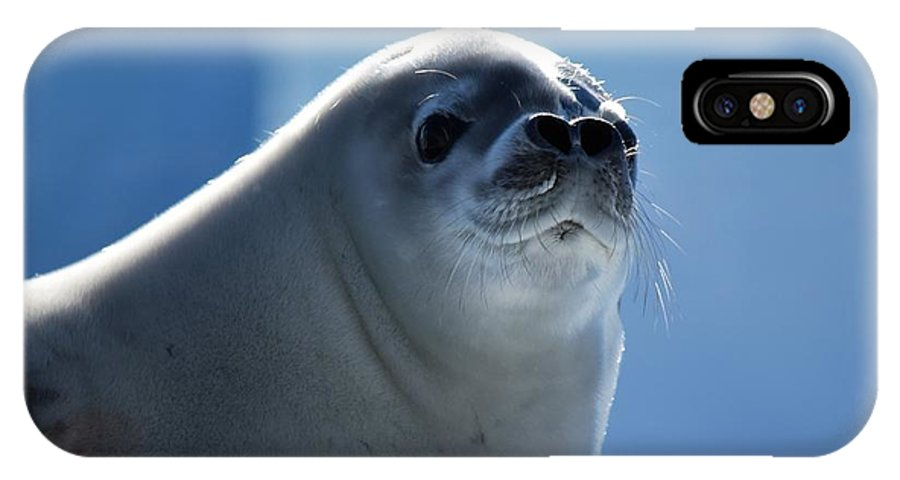 Seal IPhone X Case featuring the photograph Morning by Chris Hanlon