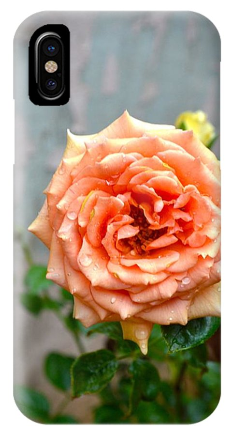 Rose IPhone X Case featuring the photograph Morning Dream by Sonali Gangane