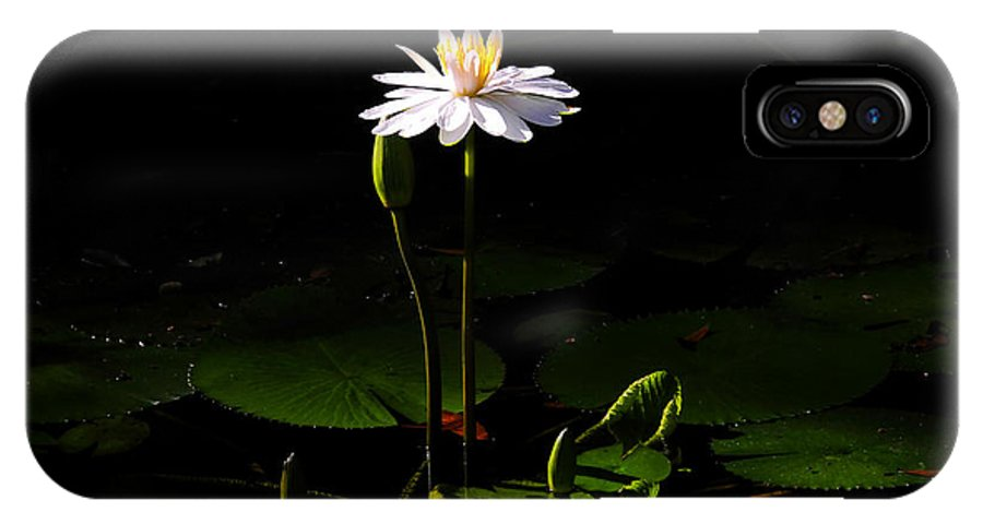 Morning IPhone X Case featuring the photograph Morning Glory by David Lee Thompson