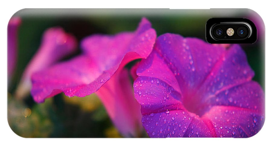 Flora IPhone X Case featuring the photograph Morning Glory by Gaspar Avila