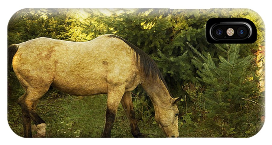 Horse IPhone X Case featuring the photograph Morning Snack by Rebecca Cozart