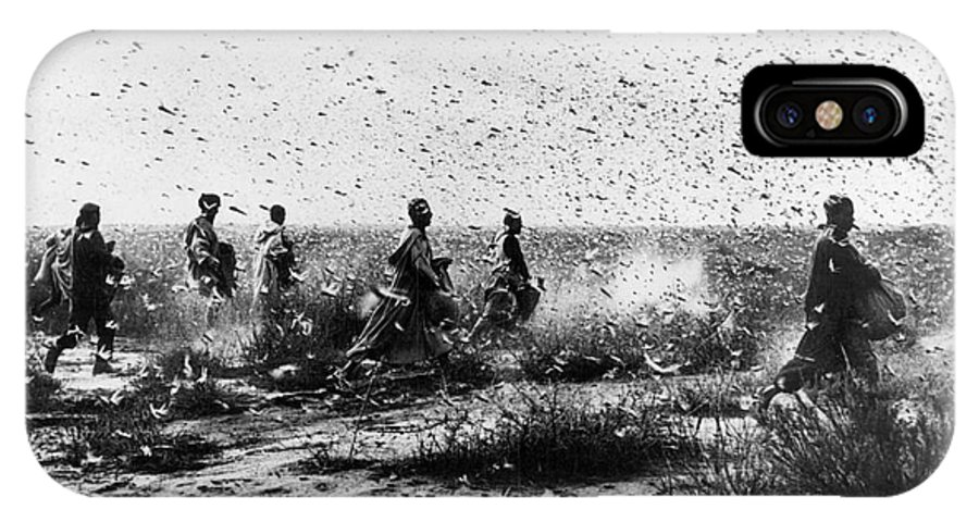 1954 IPhone X Case featuring the photograph Morocco: Locusts, 1954 by Granger