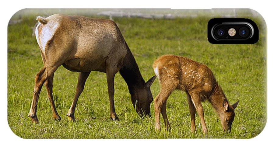 Elk IPhone Case featuring the photograph Mother Elk And Fawn by Denise McAllister