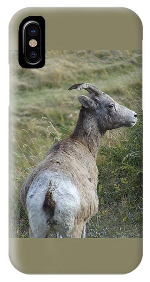 Bighorn Sheep IPhone X / XS Case featuring the photograph Mother Bighorn by Tiffany Vest