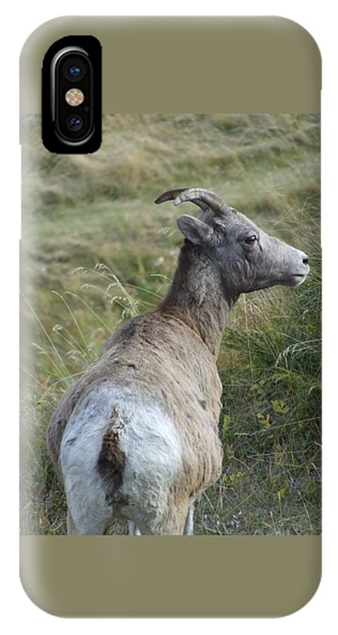 Bighorn Sheep IPhone Case featuring the photograph Mother Bighorn by Tiffany Vest