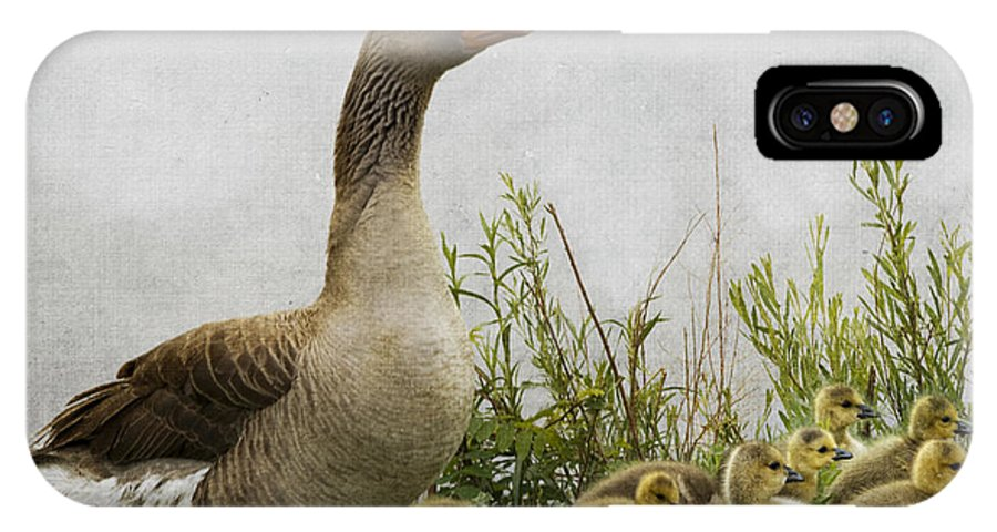 Mother Goose IPhone X Case featuring the photograph Mother Goose by Juli Scalzi