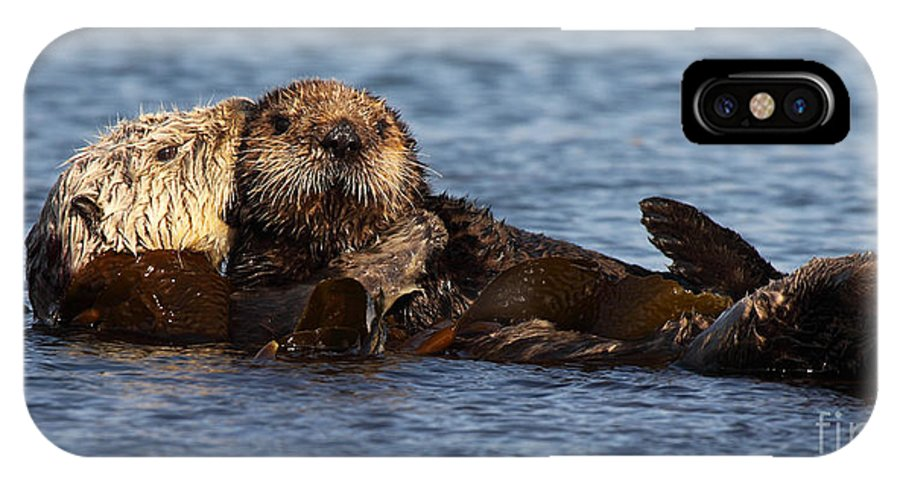 Baby IPhone X Case featuring the photograph Mother Sea Otter Cuddling Baby by Max Allen
