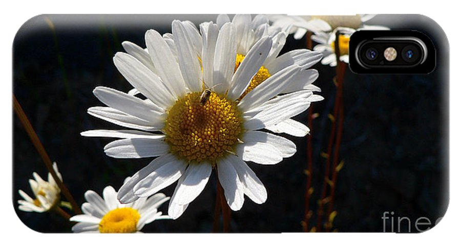 Flowers IPhone Case featuring the photograph Mountain Daisy by Larry Keahey