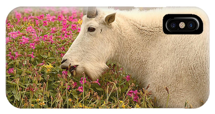 Mountain Goat IPhone Case featuring the photograph Mountain Goat In Colorful Field Of Flowers by Max Allen