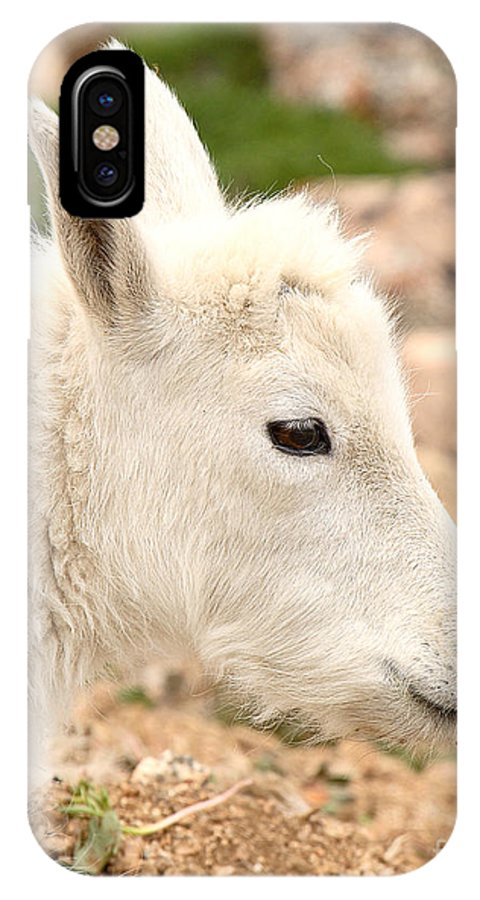 Mountain Goat IPhone X / XS Case featuring the photograph Mountain Goat Kid With Peaceful Gaze by Max Allen