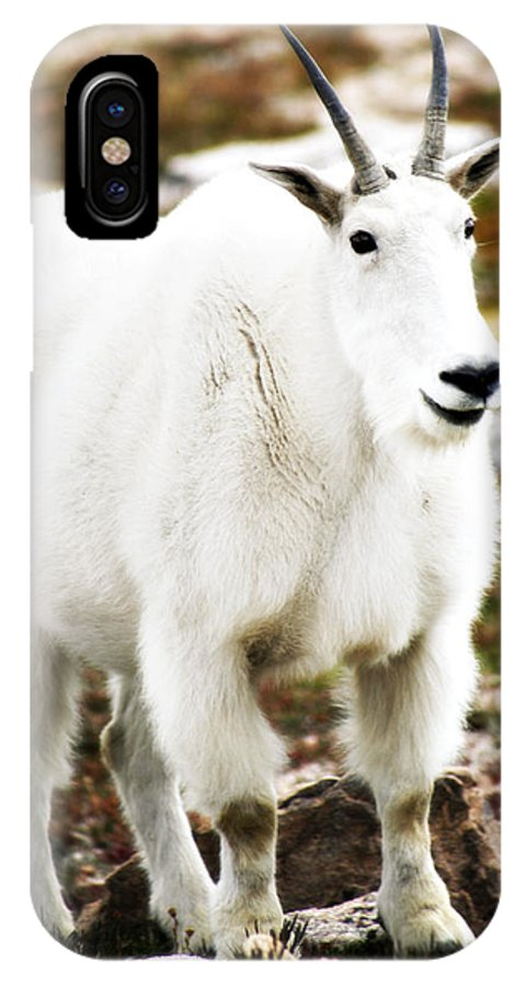 Animal IPhone Case featuring the photograph Mountain Goat by Marilyn Hunt