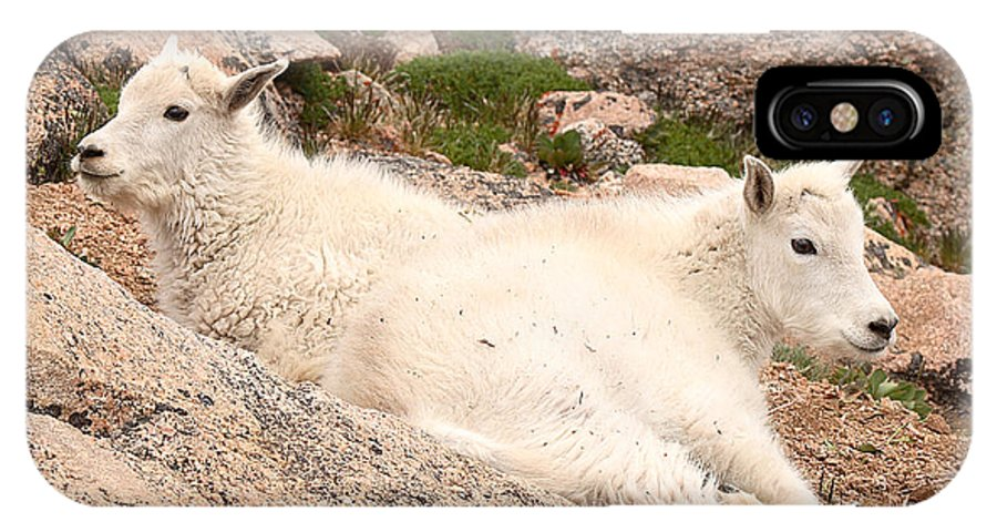 Mountain Goat IPhone Case featuring the photograph Mountain Goat Twins by Max Allen