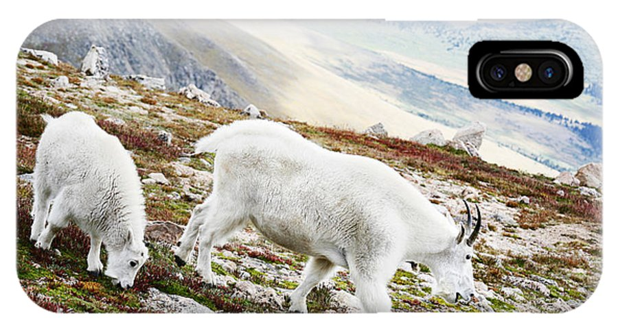 Mountain IPhone Case featuring the photograph Mountain Goats 1 by Marilyn Hunt