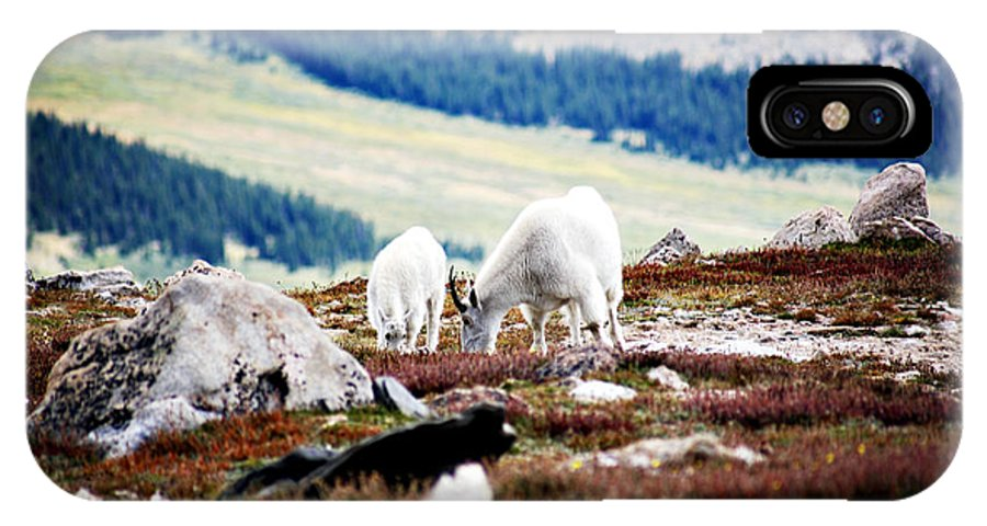 Animal IPhone Case featuring the photograph Mountain Goats 2 by Marilyn Hunt